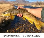 A Large Brown Trout Fish With ...