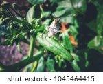 Beautiful Butterfly Face Look ...