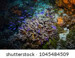 fish on the coral reef near... | Shutterstock . vector #1045484509