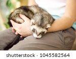 cute sleeping polecat in... | Shutterstock . vector #1045582564