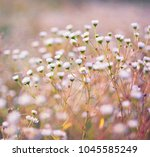 close up of white wild field... | Shutterstock . vector #1045585249