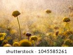 flowers without petals in... | Shutterstock . vector #1045585261