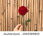 hand with a single red rose... | Shutterstock . vector #1045589845