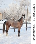 andalusian grey horse in winter ...   Shutterstock . vector #1045598371