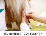 taking a sample of blood from... | Shutterstock . vector #1045666477