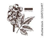 vector guarana illustration.... | Shutterstock .eps vector #1045721497