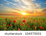 field with green grass and red... | Shutterstock . vector #104575031