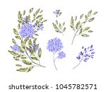 watercolor drawing of twig with ... | Shutterstock . vector #1045782571
