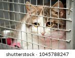 a cat with sad eyes in a cage... | Shutterstock . vector #1045788247