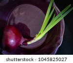 red onion growing green leaves  ...   Shutterstock . vector #1045825027