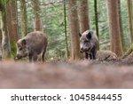 group of wild boars  sus scrofa ... | Shutterstock . vector #1045844455