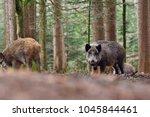 group of wild boars  sus scrofa ... | Shutterstock . vector #1045844461