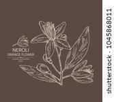 neroli  orange flower  orange... | Shutterstock .eps vector #1045868011