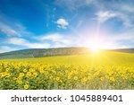 Bright Sun Above Sunflower...