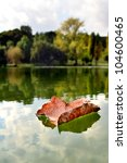 Autumn Leaf Floating On Water