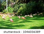 group of pink flamingos ... | Shutterstock . vector #1046036389