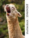Sleepee Alpaca Yawn
