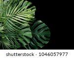 tropical leaves monstera... | Shutterstock . vector #1046057977