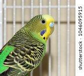 Green And Yellow Parakeet  ...