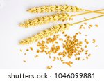 grains and springs of wheat on... | Shutterstock . vector #1046099881