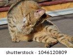 sweet little feline | Shutterstock . vector #1046120809