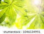 green nature background with... | Shutterstock . vector #1046134951