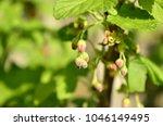 gardening  cultivation ... | Shutterstock . vector #1046149495
