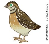 detailed quail cartoon vector... | Shutterstock .eps vector #1046152177