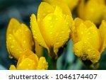 photo close small spring... | Shutterstock . vector #1046174407