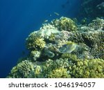 coral reef in red sea | Shutterstock . vector #1046194057