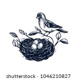 bird nest with branches set ... | Shutterstock .eps vector #1046210827