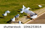 Some  Graceful White Seagulls...