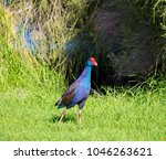 a brilliantly feathered  purple ...   Shutterstock . vector #1046263621