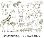 illustration drawing style of... | Shutterstock . vector #1046265877
