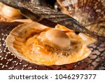 scallop shell burn with... | Shutterstock . vector #1046297377