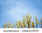 cornus mas fruit tree in bloom  ... | Shutterstock . vector #1046315959