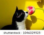 cat sniffing pink flower ... | Shutterstock . vector #1046329525