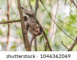 Small photo of Monkey or ape is the common name of the chordate phylum. Floor mammal Rated apes (Primates) manner similar to humans.