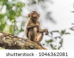 monkey or ape is the common... | Shutterstock . vector #1046362081