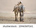 zebra. wild animals on the... | Shutterstock . vector #1046369161