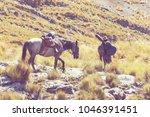 donkey caravan in cordiliera... | Shutterstock . vector #1046391451