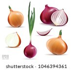 vector collection of onions... | Shutterstock .eps vector #1046394361