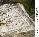natural abstract detail of a broken tree - stock photo