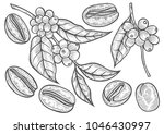 coffee branch. plant with leaf  ... | Shutterstock .eps vector #1046430997