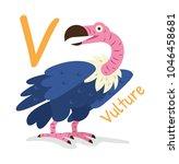 Animal Alphabet   V For Vultur...