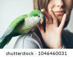 Stock photo close up of friendly and cute monk parakeet green quaker parrot is sitting on woman shoulder 1046460031