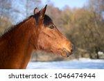 portrait of a brown mare in...   Shutterstock . vector #1046474944