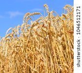 grain field in the rural... | Shutterstock . vector #1046512171