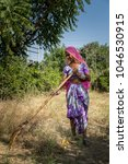 Small photo of a woman taking care of amla plants in a farm in rajasthan, india