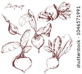 vector hand drawn vegetable set ... | Shutterstock .eps vector #1046571991